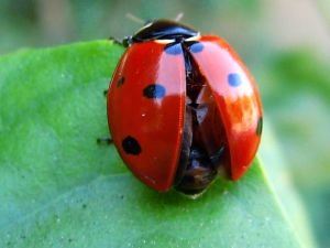 Lady Bug_4184175500_o.jpg